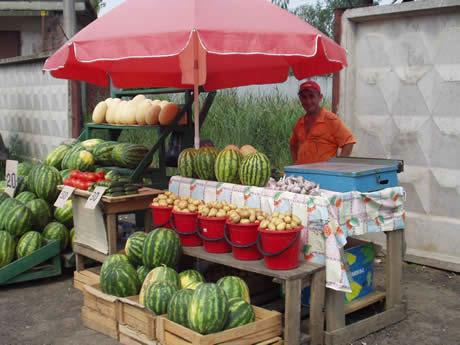 Guida all acquisto di meloni e angurie sul mercato russo for Come costruire un telaio a buon mercato