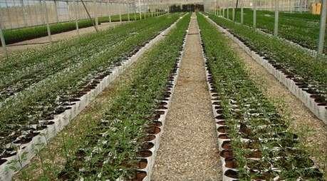 Qualificazione innovazioni tecniche e competitivit del for Irrigazione serra