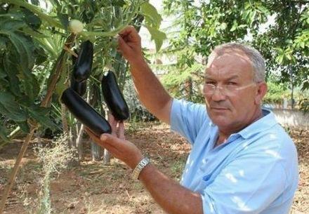Palermo per hobby innestato pomodoro su pianta di melanzana for Melanzane innestate