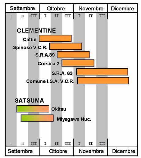 Al via la campagna agrumicola nell 39 arco ionico apulo for Calendario concimazione agrumi