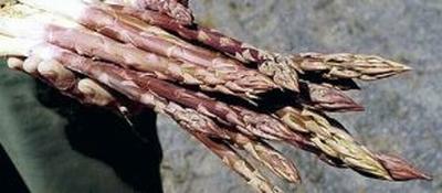 Albenga l 39 asparago violetto valorizzato in iniziative for Concessionaria renault fratelli biagioni