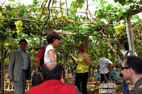 Puglia produttori e ricercatori della moldova in visita - Uva da tavola coltivazione ...