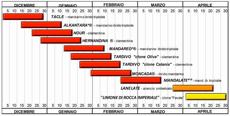 Varieta 39 di agrumi a maturazione tardiva le proposte del for Calendario concimazione agrumi