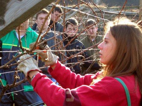 Giochi di agraria studenti in gara nella campagne di for Potatura del melo