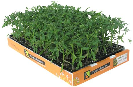 Ecofaber porta l 39 orto fai da te all 39 infiorata di noto sr - Porta piante fai da te ...