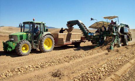Altopiano della sila cosenza al via la semina delle for Raccolta patate