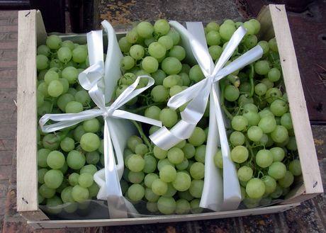Sicilia la ditta fichera torrisi esporta uva da tavola - Uva da tavola di mazzarrone ...