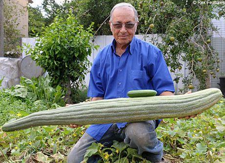 Ravenna il cetriolo gigante dell 39 orto punta a entrare nel for Coltivare meloni