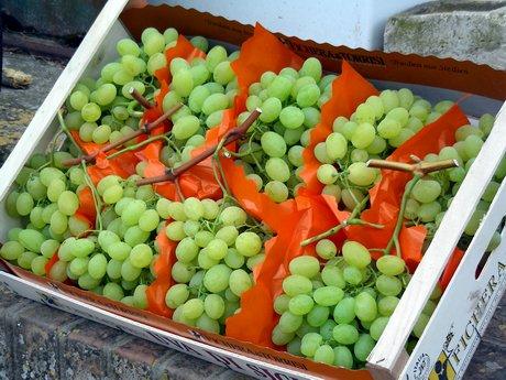 L 39 uva italia di mazzarrone ct tiene banco sul mercato - Uva da tavola di mazzarrone ...
