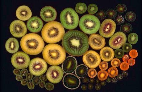 L 39 actinidia da pianta selvatica a coltivazione for Kiwi coltivazione