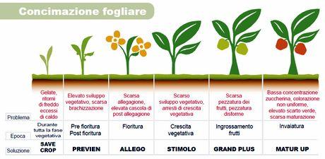 Fertenia soluzioni naturali di fertilizzazione per ogni for Calendario concimazione agrumi