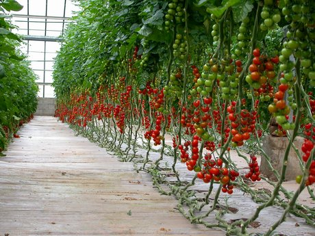 Uk fruit and veg self sufficiency falls to 56 per cent