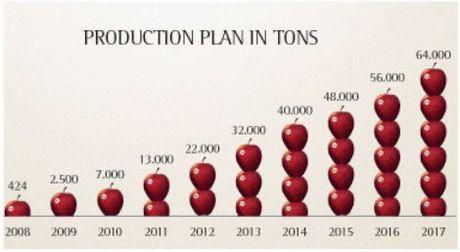 Prospettive e piani di produzione della mela modi 39 for Piani di produzione