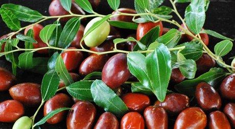 Ritornano le giuggiole tipico frutto del veneto for Una storia a pianta aperta