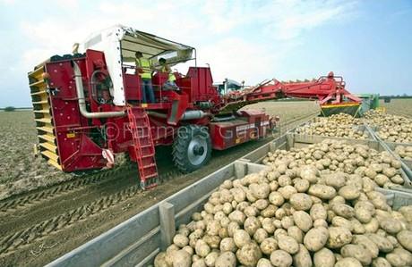 Uk la raccolta delle patate volge al termine for Raccolta patate