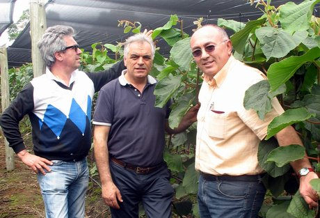 Vivai Rosso Antonio : Dal pane vivai offre piante di kiwi da un paese esente da batteriosi