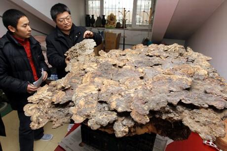 Quanto per mezzi da un fungo per piedi