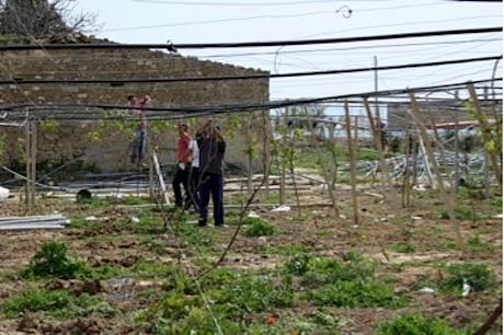 Visite tecniche ai vigneti per la produzione di uva da for Tecniche di irrigazione