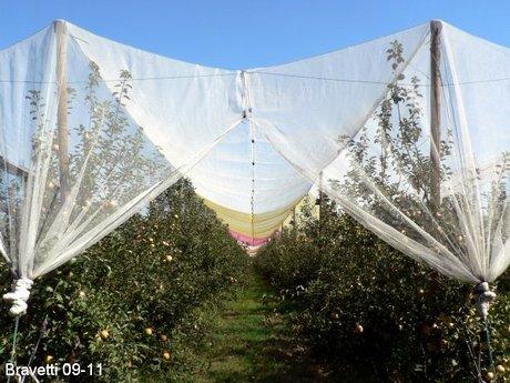 Italy: Photoselective anti-hail nets make Fuji apples red
