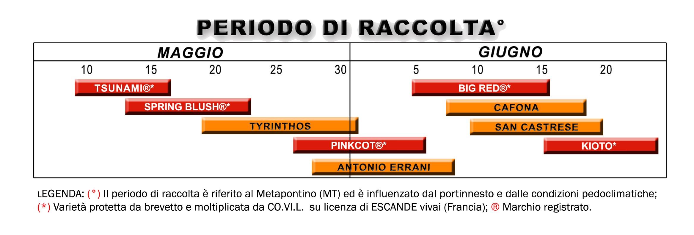 Calendario Maturazione Albicocche.La Potatura Dell Albicocco Si Vede In Campo Il 4 E 5 Agosto