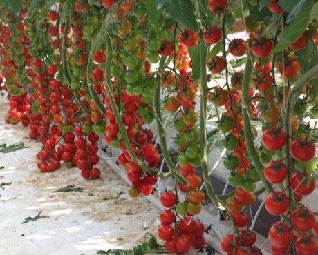 I substrati di perlite italiana una soluzione for Fragole in vaso