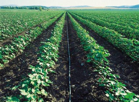 Netafim il punto di riferimento per l irrigazione da for Irrigazione per aspersione