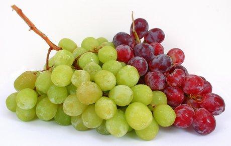 Marco salvi fruitimprese il cile e 39 il principale - Red globe uva da tavola ...