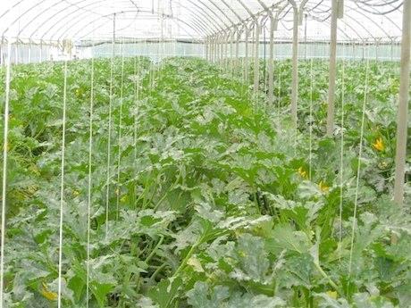 Azienda agrituristica parmenide incoraggiante la campagna for Ortaggi estivi