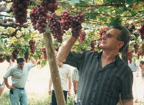 Addio a salvatore accetta pioniere nell 39 uva da tavola - Uva da tavola di mazzarrone ...