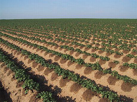 Italia ventajas del riego por goteo en for Irrigazione a goccia per pomodori