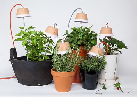 Lampade a led bulbo una soluzione brillante per for Piante da bulbo