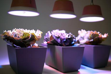 Grazie Ad Una Tecnologia Sviluppata In Anni Di Studi Sullu0027interazione Tra  Luce Artificiale E Piante, Quadra Riproduce Il Corretto Spettro Luminoso Per  ...