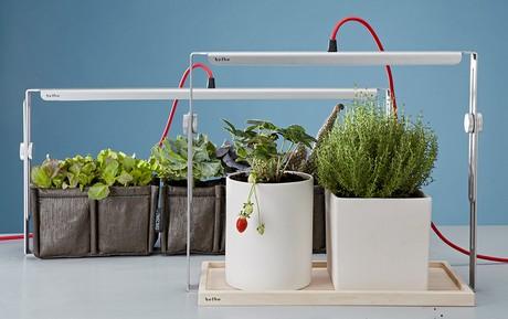 Lampade a led bulbo una soluzione brillante per coltivare in casa - Lampade a led per casa ...