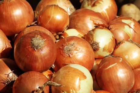 Italy: Quality low priced imported onions affect market