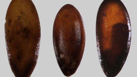 Viene dalla sardegna il melone piu 39 antico del mediterraneo for Frigoriferi poco profondi