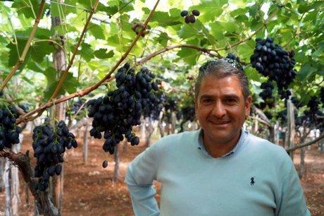 Az sant 39 ambrogio ba per le uve con semi non ci sono - Red globe uva da tavola ...