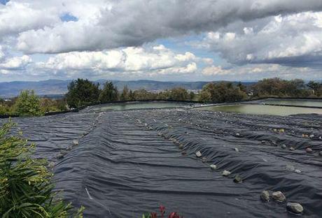 Messico: Si Diffondono I Sistemi Per Riutilizzare Lu0027acqua Piovana Per  Lu0027irrigazione