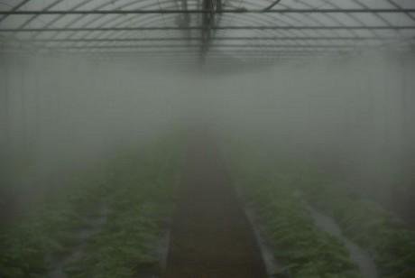 Sistema di nebulizzazione quanto costa