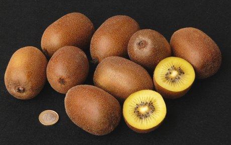 Kiwi Soreli.