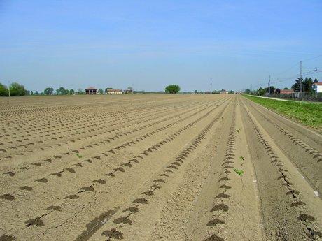 Gestione della nutrizione della patata attraverso la for Netafim irrigazione