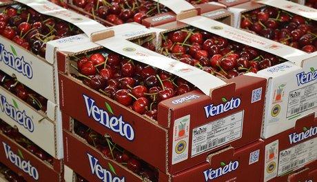 Nuovo packaging per le ciliegie della opo veneto for Calendario fiere 2016