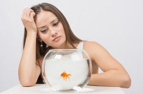 Quanto dura l 39 attenzione di un consumatore giovane meno for Quanto vive un pesce rosso