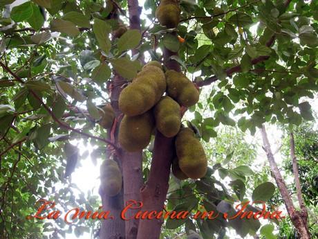 Jackfruit solo una curiosita 39 o qualcosa di concreto for Albero di ananas