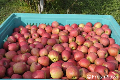 Italy: Apples might be exported to Vietnam