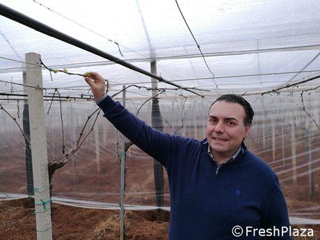 Si fa bio azienda siciliana di uva da tavola diventa biodinamica - Uva da tavola precoce ...