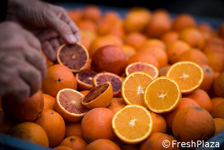 Bevande all'arancia: l'innalzamento della percentuale minima agevolera'  solo gli importatori di succo di agrumi