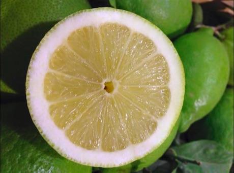 Clone apireno di Femminello presso l'azienda Il Limone del Barone