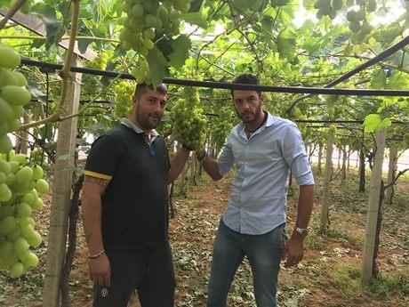 Redavid fruit trading internazionale specializzato in uva da tavola - Uva da tavola precoce ...