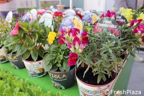 Bloemen In Pot.Biojournaal Nl Eetbare Biologische Bloemen In Pot